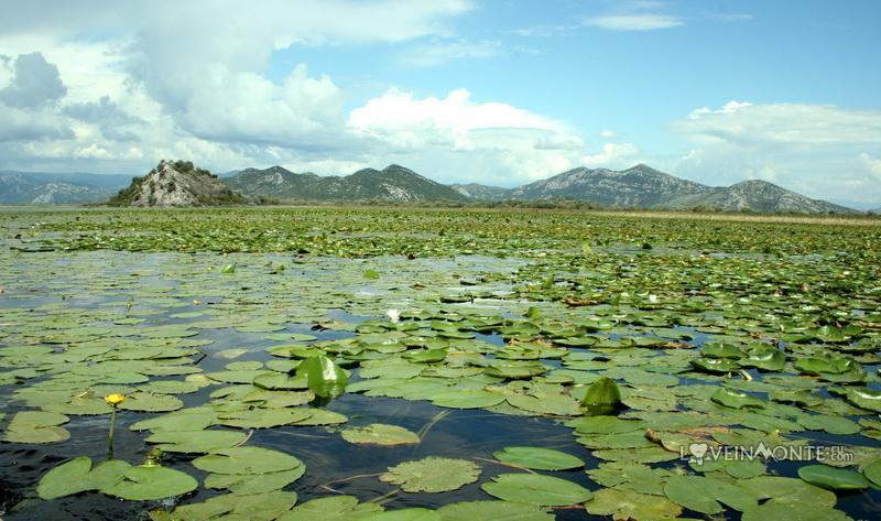 Скадарское озеро кувшинки