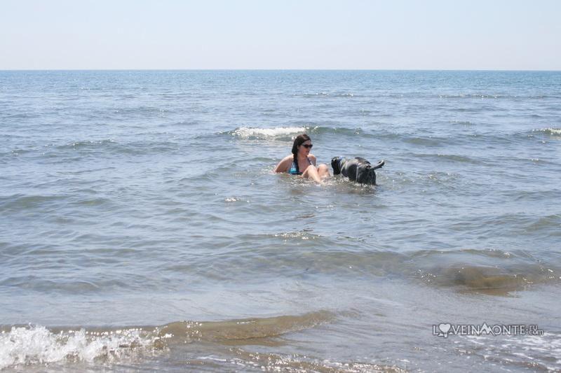 Велика Плажа, Сафари, Черногория Ульцинь