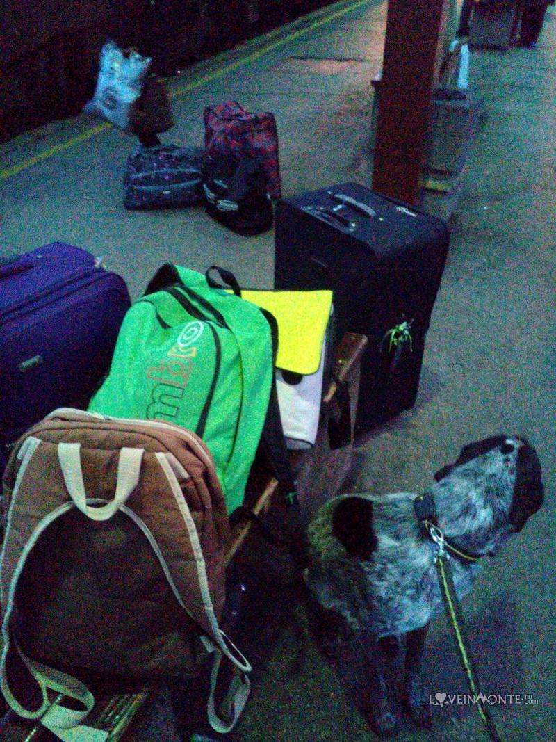 Переезд из Черногории в Беларусь с собакой