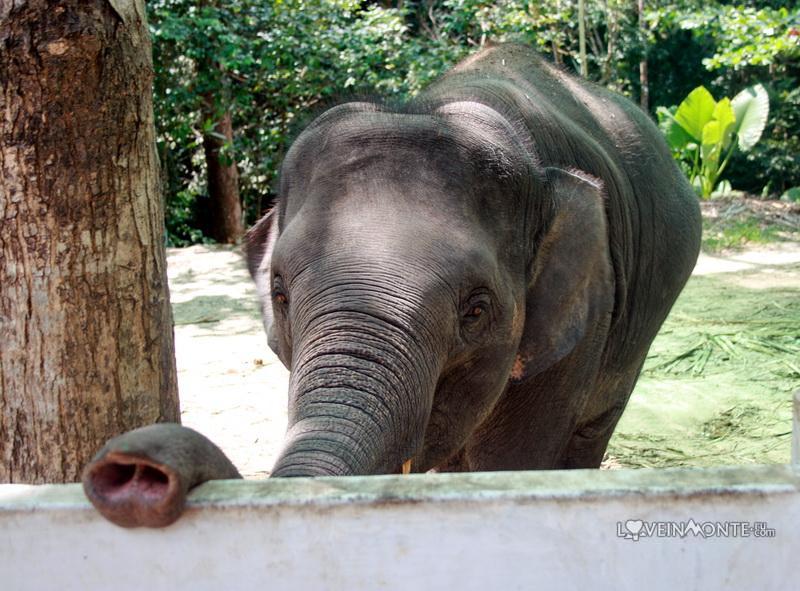Слоны у водопада Намуанг