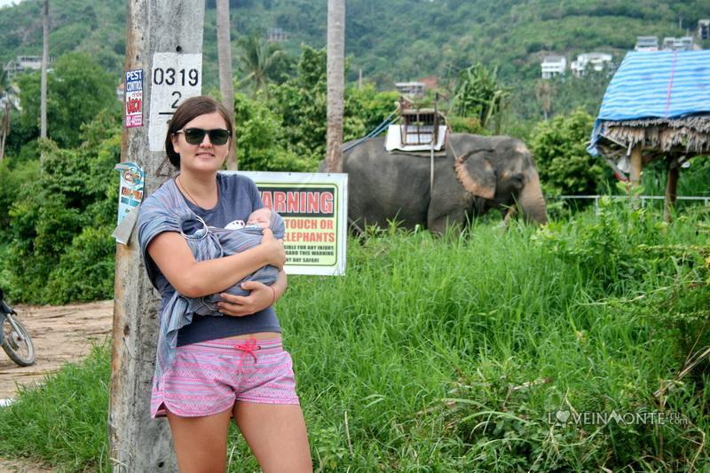 Слоны на Самуи