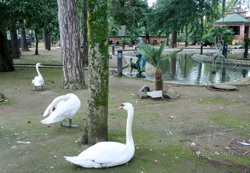 Лебеди в Батуми