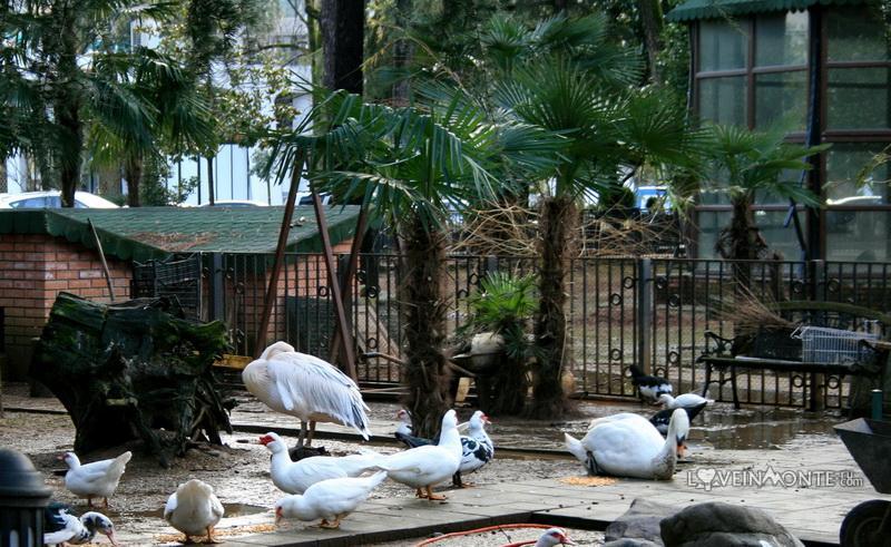 Птичий питомник, Батуми