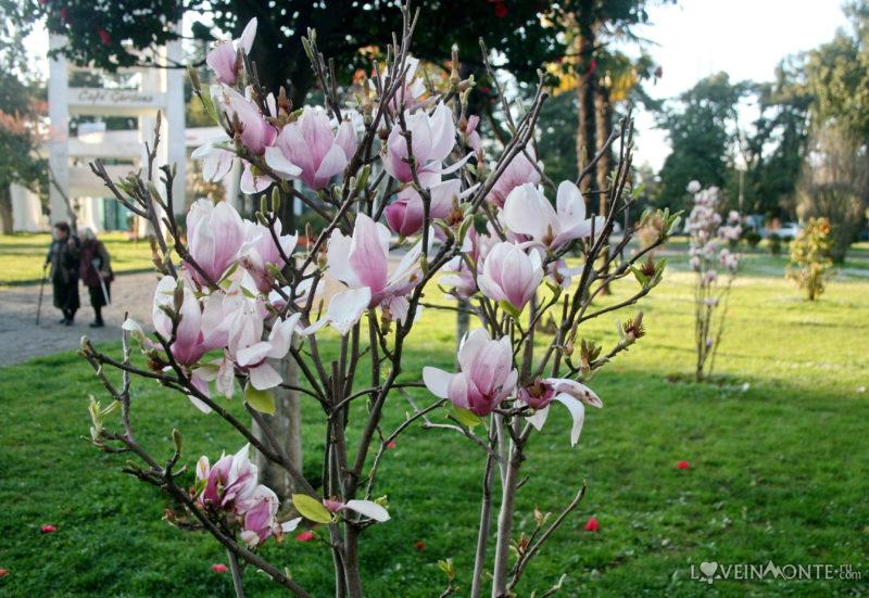 Батуми весной