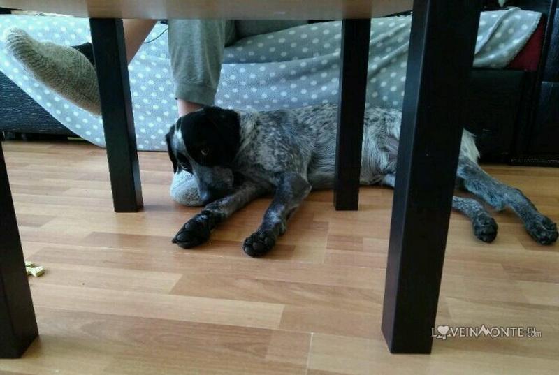 Собака в Батуми