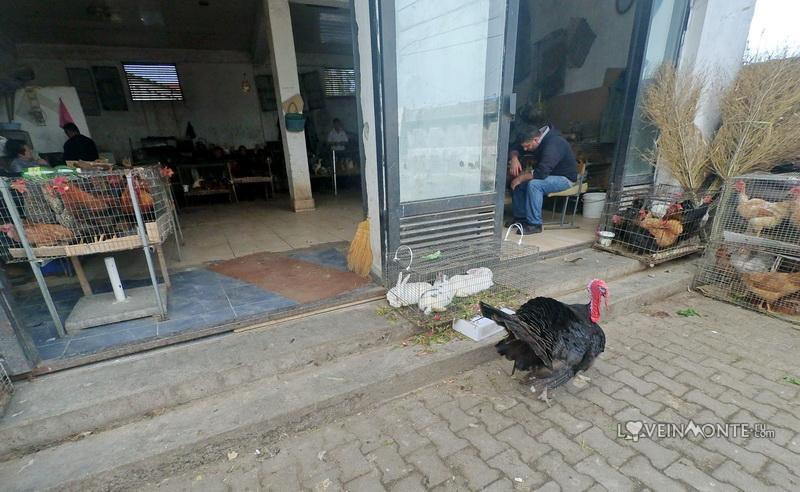 Отдел с живой птицей на рынке Бони