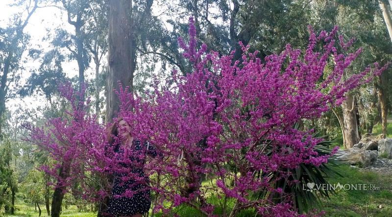 Весна в Батуми